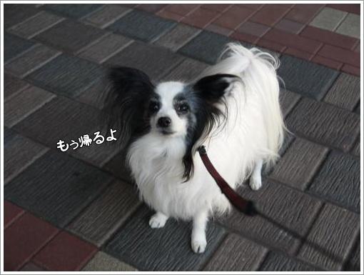 022_convert_20130212101406.jpg
