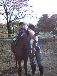 コウセイ馬