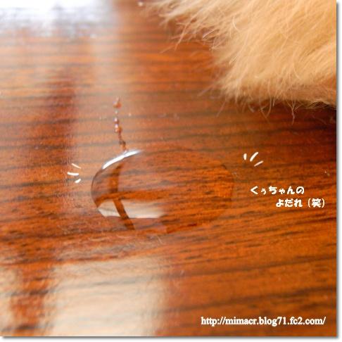 cats_20100216202147.jpg