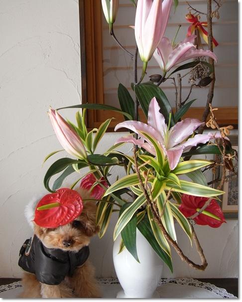 cats_20100227164054.jpg