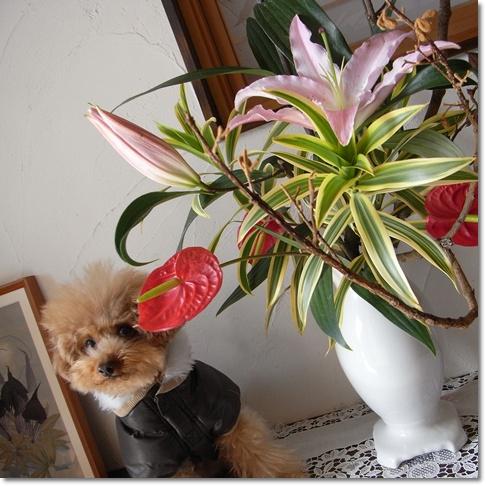 cats_20100227164542.jpg