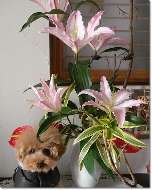 cats_20100227164830.jpg