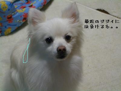 s-CIMG9237.jpg