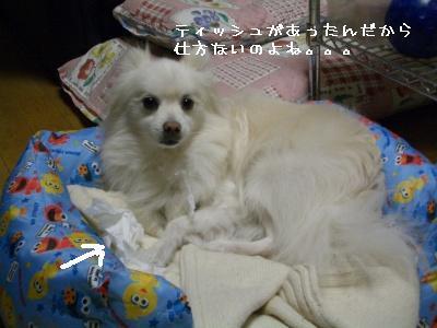 s-CIMG9339.jpg