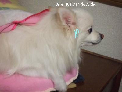 s-DSCF1950_20100324000859.jpg