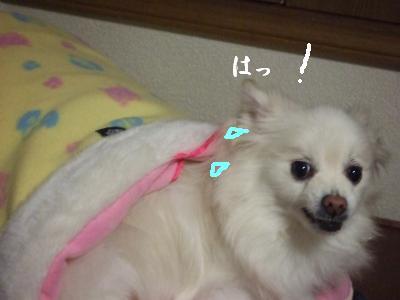 s-DSCF1951_20100324000915.jpg