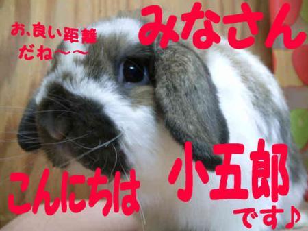 小五郎 5