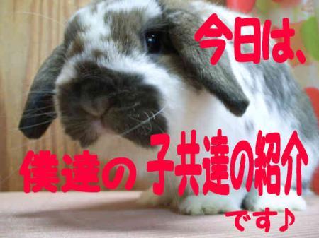 小五郎 6