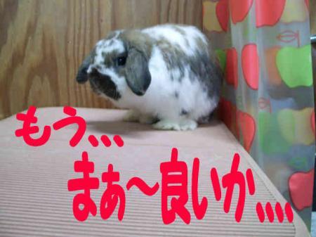 小五郎 4