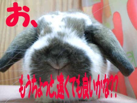 小五郎 2