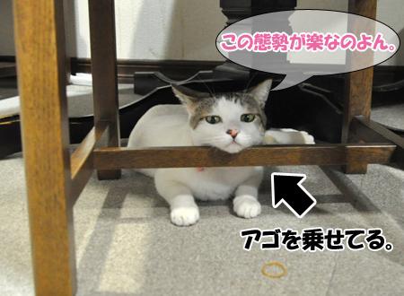 100101_お正月猫1