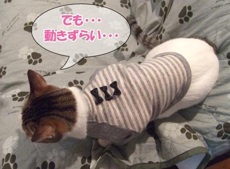 100111_リン洋服3