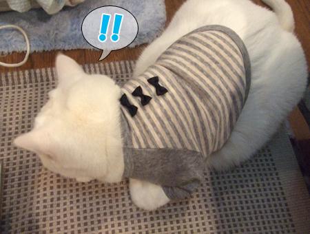 100111_メメタ洋服1