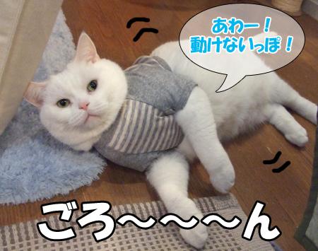 100111_メメタ洋服2
