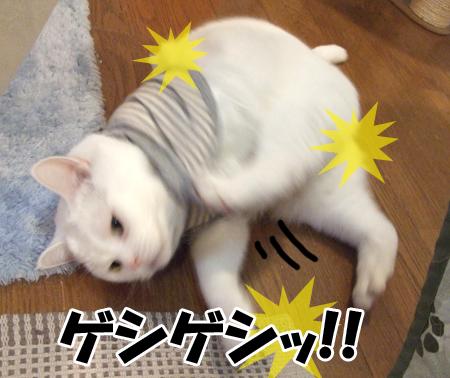 100111_メメタ洋服3