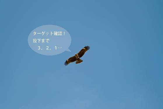 _SDI5800-Edit.jpg
