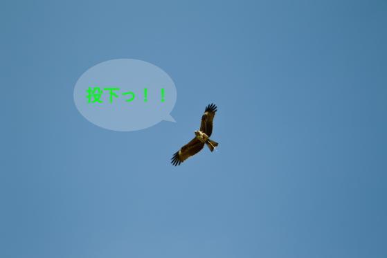 _SDI5801-Edit.jpg