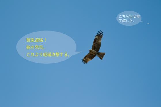 _SDI5823-Edit.jpg