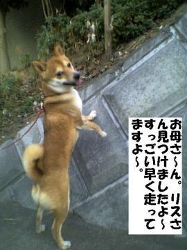 RISU.jpg