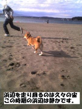 hamabewohasiru.jpg