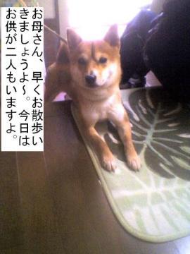 hayoiko.jpg