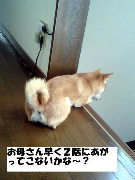 hayokoiya.jpg