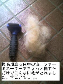 kanmouki.jpg