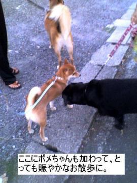 nigiyakanasanpo.jpg
