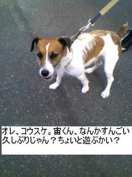 orekousuke.jpg