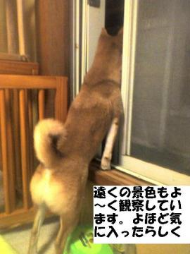 yohodokiniitta.jpg