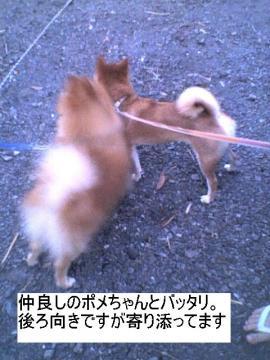 yorisoufutari.jpg