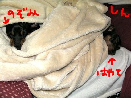 20100604-5.jpg
