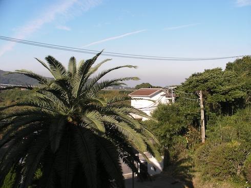20101105-7.jpg