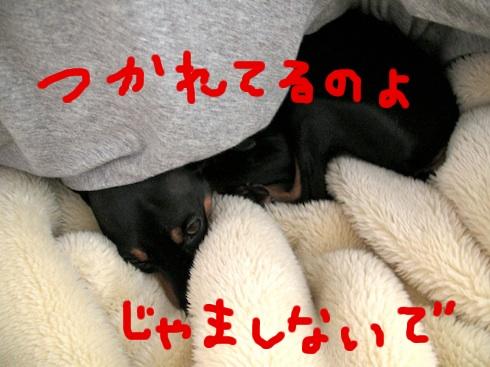 20110102-6.jpg