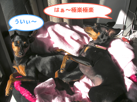 20130111-1.png