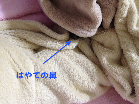 20130124-1.png