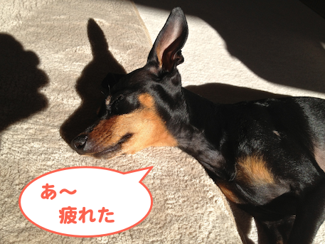 20130129-1.png