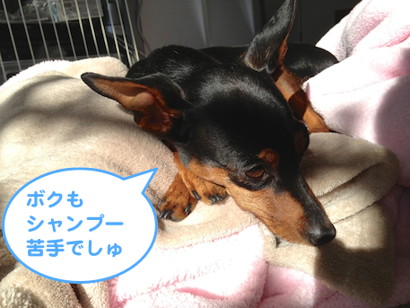 20130129-3.png