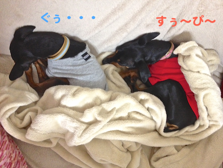 20130202-4.png