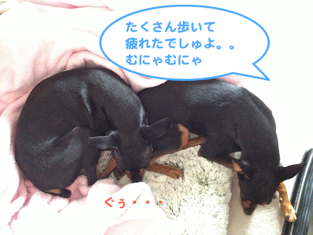 20130204-4.png