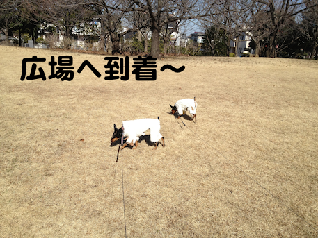 20130214-4.png