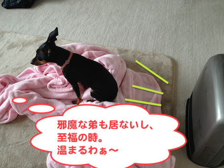20130220-1.png