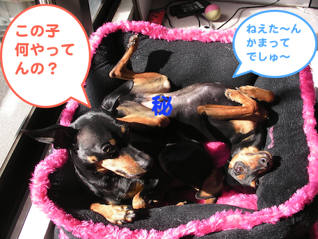 20130222-4.png
