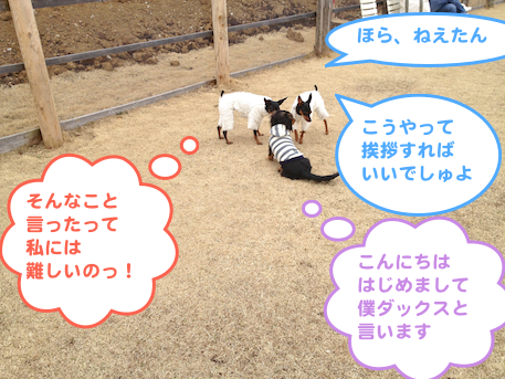20130304-1.png
