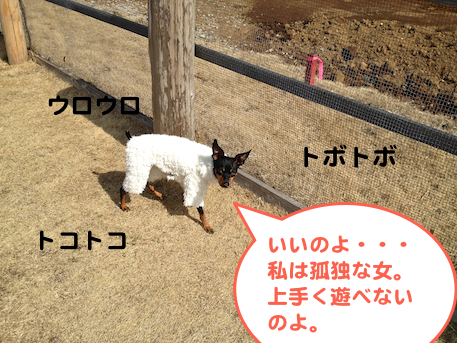 20130304.png