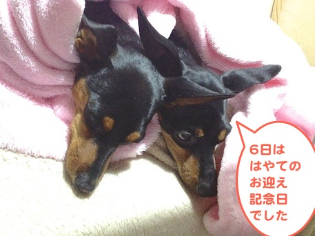 20130307-1.png