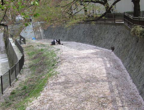 20110415-20.jpg