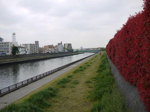20110422-02.jpg