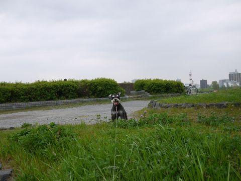 20110422-31.jpg