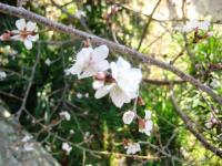 10.1.19 浄土寺の花1